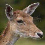Profile picture of Ian Simpson