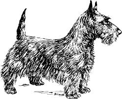 black and white illustration of a scottie dog