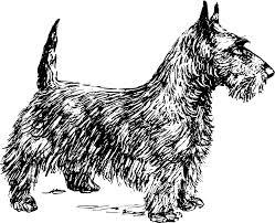 scottie dog image