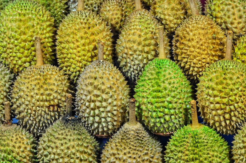 several green, spiky durian fruit