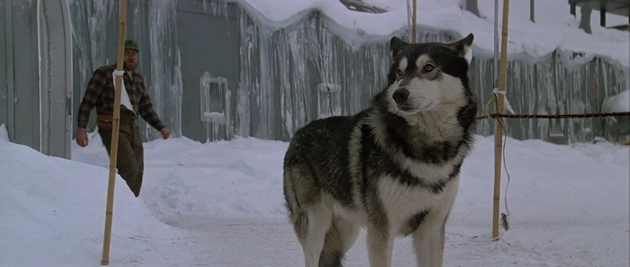 Why would anyone want to hurt this dog? - The Thing (1982).
