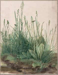Albrecht Dürer, The Large Piece of Turf, 1503.