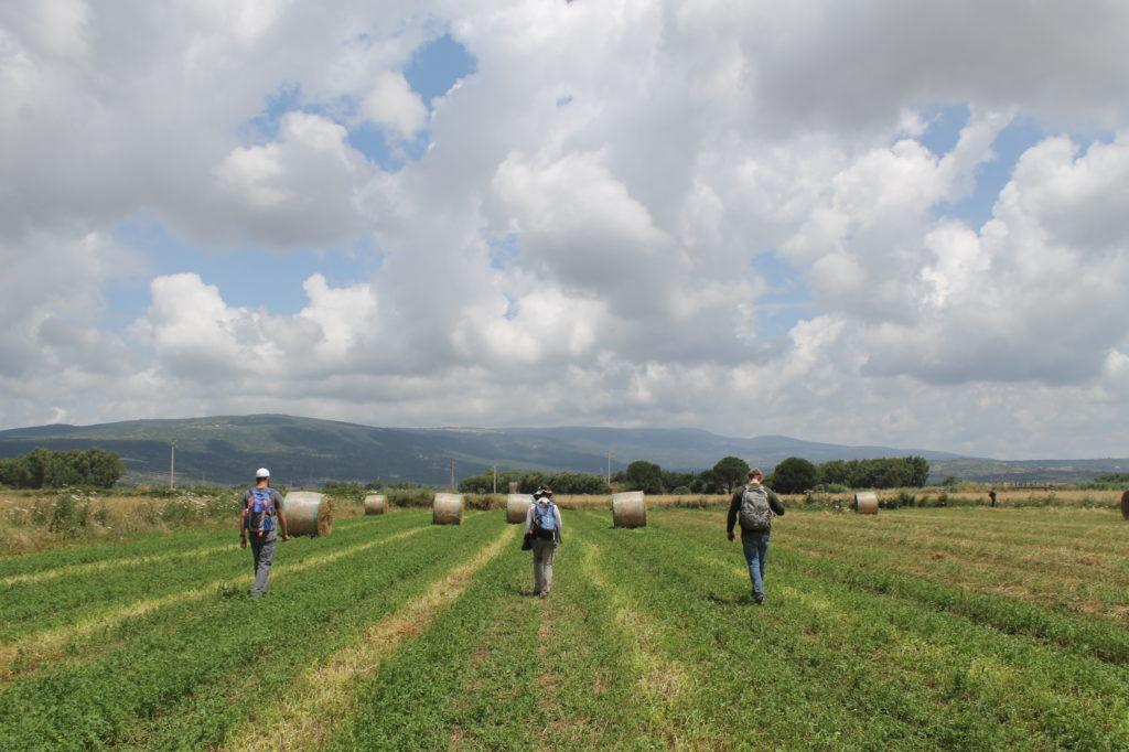 Field walking in Zone A.
